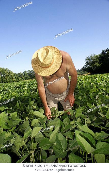 Farmer Checking Soybeans