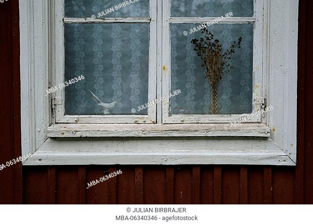 bird,cottage,curtain,death,dried,dry,eyes,figurine,flowers,gloom,house,old,outside,patina,red,sad,scuplture,seren,white frame,Window