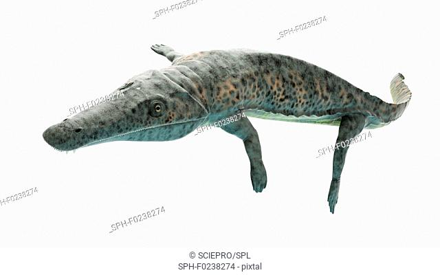 Illustration of an archegosaurus