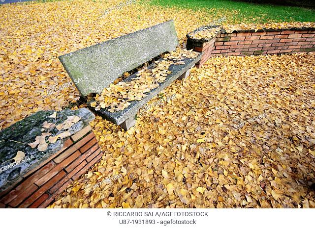Italy, Lombardy, Public Gardens in Autumn, Ginkgo Ginkgo Biloba Leaves Covered Bench