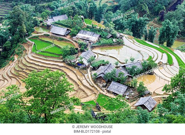 Aerial view of rice paddies and houses in rural landscape