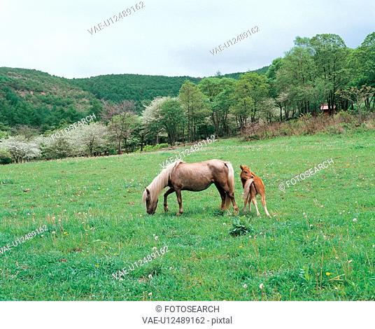 vertebrate, horse, scenery, nature, animal, film
