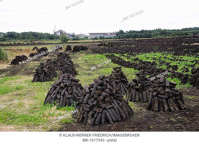 Peat briquettes used for fuel in private homes are dried by the citizens themselves, Birr, Leinster, Republic of Ireland, Europe