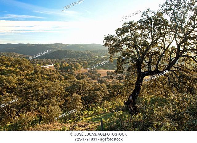 Sierra Norte de Sevilla Natural Park, Landscape, Alanis, Seville-province, Spain