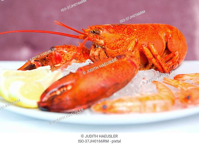Close up of plate of lobster