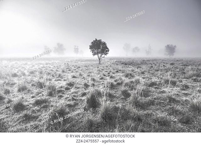 Amazing country field landscape with trees hazed in shades of violet fog. Wondrous misty background taken Alleena, NSW, Australia