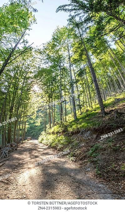Forest Road Heading Towards Planwiesen Recreational Area, Kalkalpen National Park, Austria
