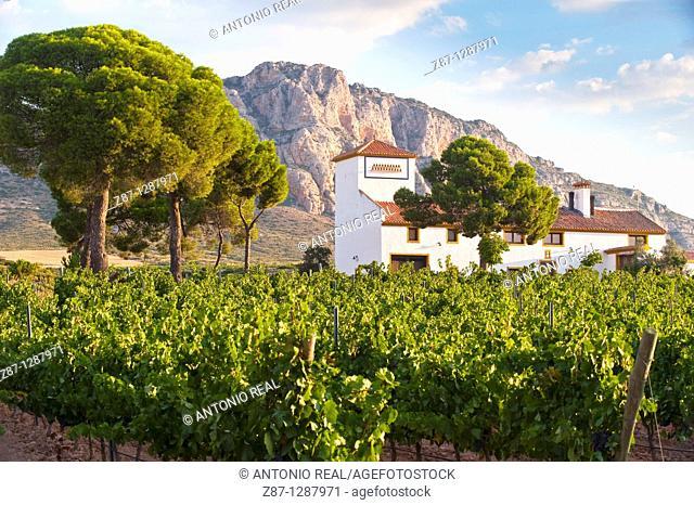 Vineyards, Bodegas Almanseñas, Almansa, Albacete, Spain