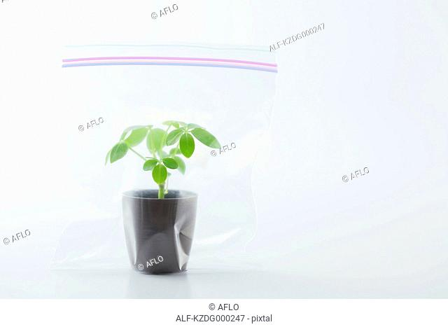 Potted Plant In Plastic Bag