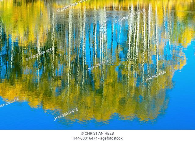 North America, USA, Central Oregon, Oregon, Deschutes River, Reflection of Aspen Trees