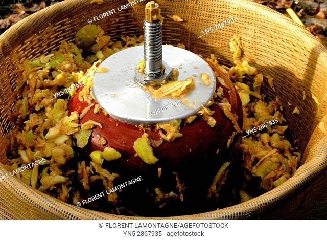 Juice extractor for making natural and organic apple juice - Step 2: grinding and shredding apples fruit