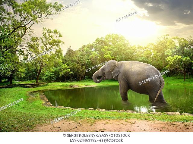 Elephant, bathing in lake of nature resesrve