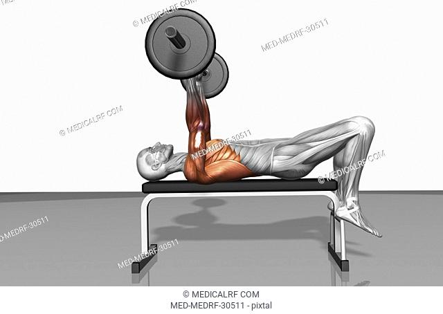 Overhead barbell triceps extension Part 1 of 2