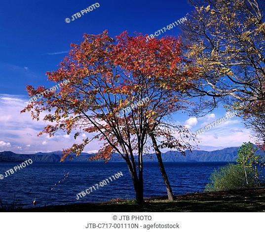 Red leaves Blue sky Clouds Water surface Wave Autumn Lake Shikotsu Chitose Hokkaido Japan