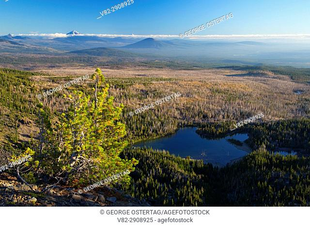 Whitebark pine with Little Three Creek Lake from Tam McArthur Rim Trail, Three Sisters Wilderness, Deschutes National Forest, Oregon