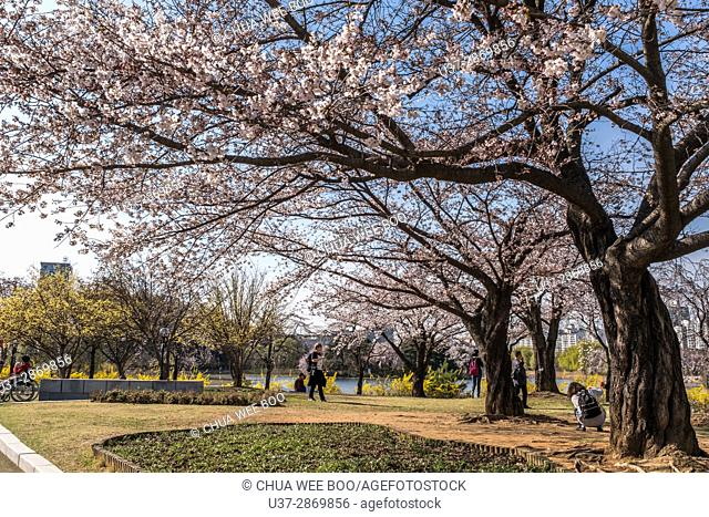 South Korea, Seoul, street scene, park