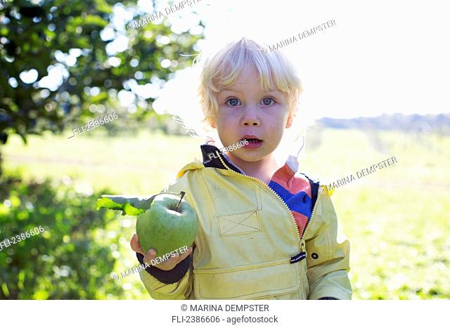 2-year-old boy holds freshly picked apple in orchard; Ontario, Canada