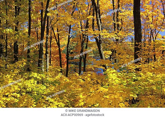 Fall colors in Gatineau Park, Quebec, Canada