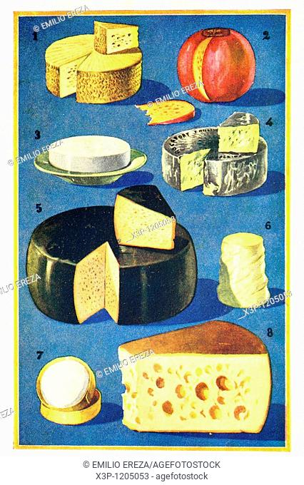 Assorted cheeses  Antique illustration  1900