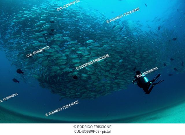 Diver swimming with school of jack fish, underwater view, Cabo San Lucas, Baja California Sur, Mexico, North America