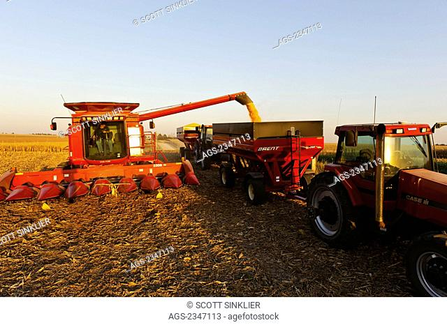 Agriculture - A Case IH combine augers grain corn into a grain wagon during the Autumn harvest operations / Central Iowa, USA