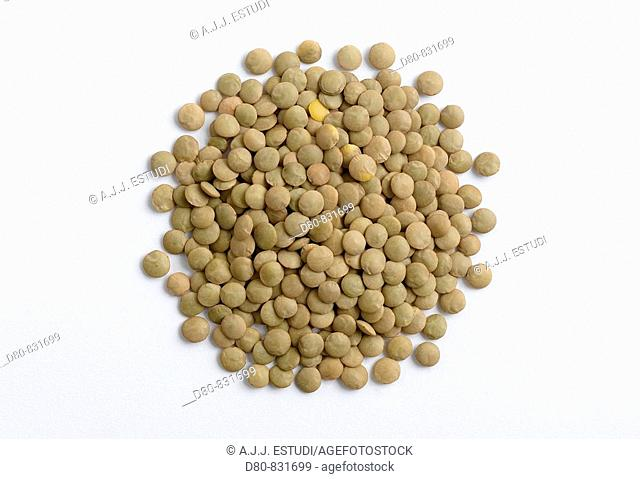 legume type on white background