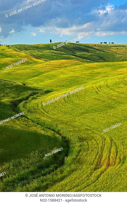 Fields landscape, Val d'Orcia, UNESCO world heritage site, Pienza, Siena province, Tuscany, Italy
