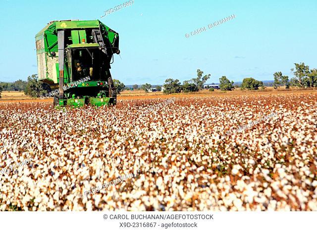 a John Deere cotton harvesting machine. Narrabri, western plains NSW, Australia