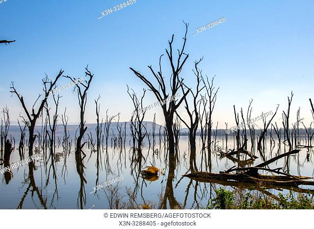 Dead trees jolt above the surface of Lake Nakuru in Lake Nakuru National Park, Kenya