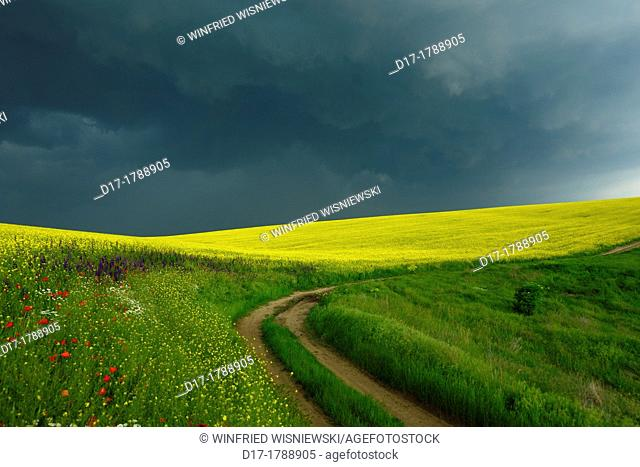 field border at a rape field in Bulgaria ahead of a thunderstorm