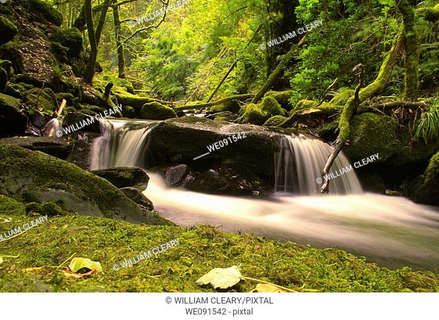 A small waterfall on a fast flowing river running through a forest