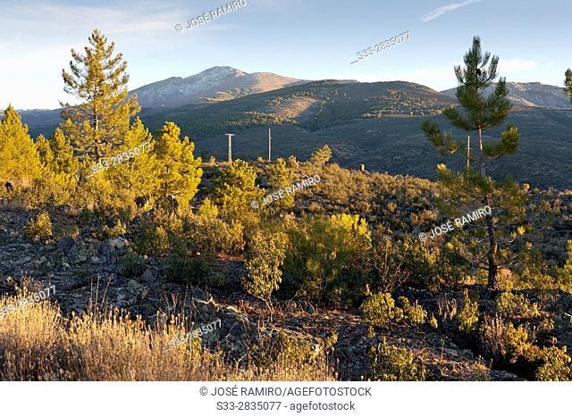 Ocejon peak in the Sierra Norte. Guadalajara. Castilla la Mancha. Spain. Europe