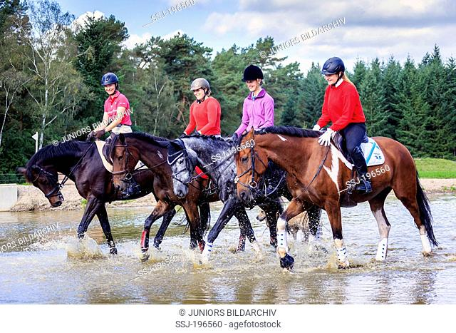 Warmblood. Four riders on horseback in shallow water. Germany
