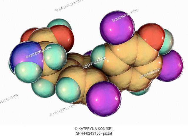 Thyroxine hormone, molecular model