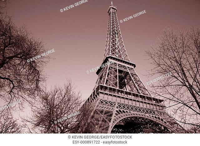Eiffel Tower with Winter Trees in Paris, France