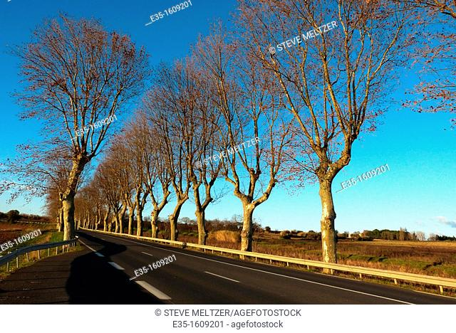 All across France plane trees are plannted to reduce the effects of winds across flat plains