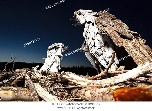 Osprey - Driftwood Art by Paul Lewis - Esquimalt Lagoon, Victoria, Vancouver Island, British Columbia, Canada