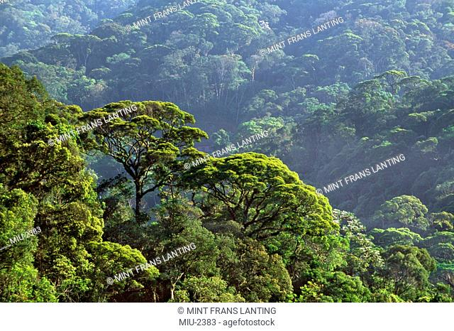 Atlantic rainforest, Serra dos Orgaos National Park, Brazil
