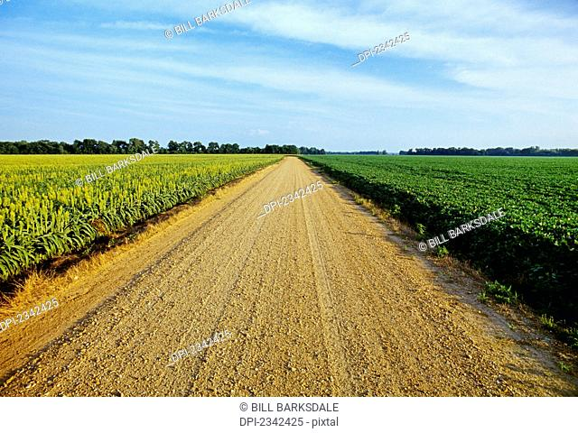 Agriculture - A gravel country road passes between fields of grain sorghum (l) and soybeans (r) in morning light / Tennessee, USA
