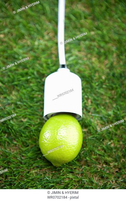 Green lime plug