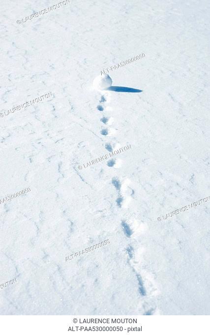 Snowball leaving trail as it rolls through snow