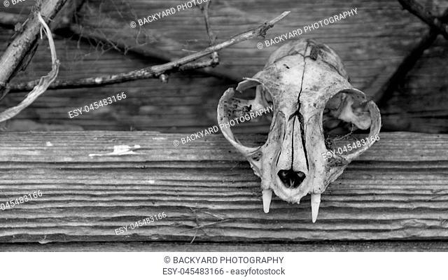 Animal Skull and Barn