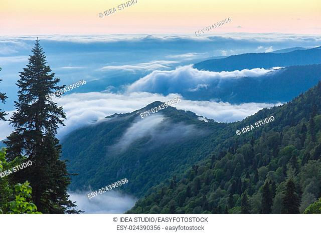 Green mountains and trees over the clouds