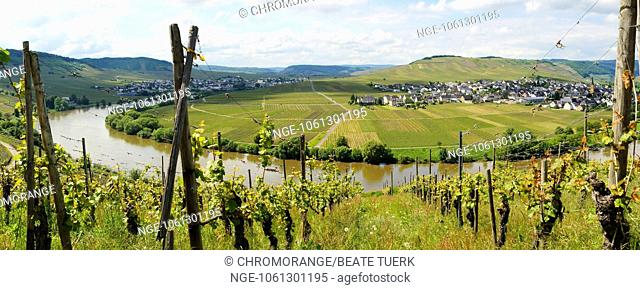 Moselle valley with Leiwen and Trittenheim