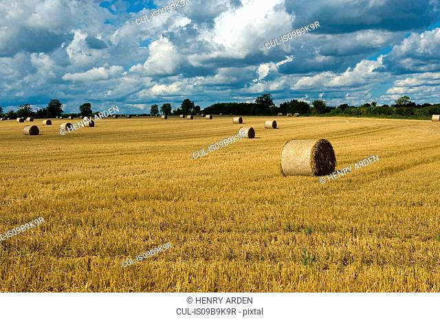 Rows of hay bales in harvested rural field