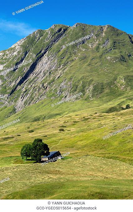 Plateau de Saugue, Hautes Pyrenees, France