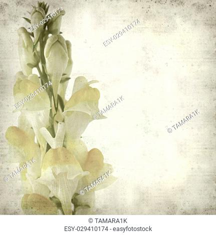 textured old paper background with yellow toadflax flower
