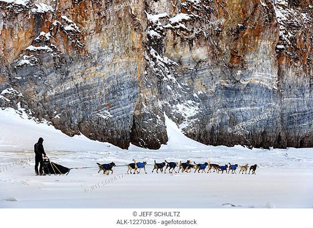 Norwegian musher, Joar Leifseth-Ulsom, near Ruby during the Iditarod Sled Dog Race 2014