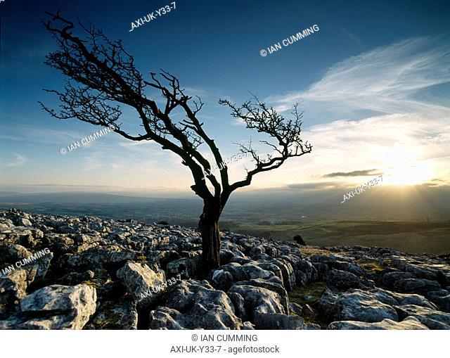 Twisleton Scars near Ingleton, Yorkshire Dales National Park, North Yorkshire, England