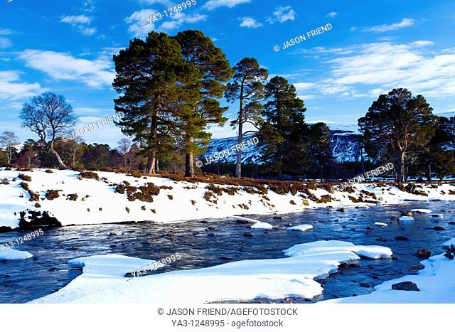 Scotland, Aberdeenshire, Mar Lodge Estate  Scots Pines alongside a mountain river, under the shadow of snow covered hills near Braemar and the Linn of Dee